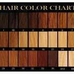 Human Hair Boutique Color Chart